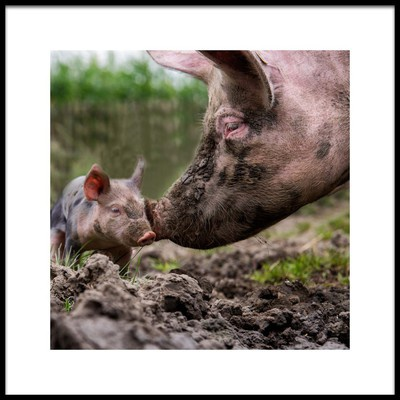Art print titled Get Into the Mud, and Get Yourself Dirty by the artist Gert van den Bosch