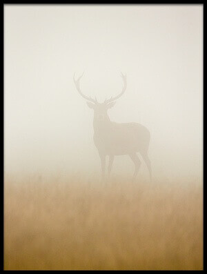 Art print titled Ghost Stag by the artist Stuart Harling