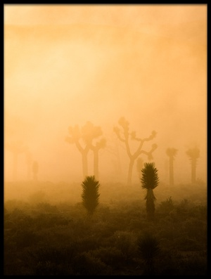 Art print titled Ghostly Shadows by the artist Mike Hitchner