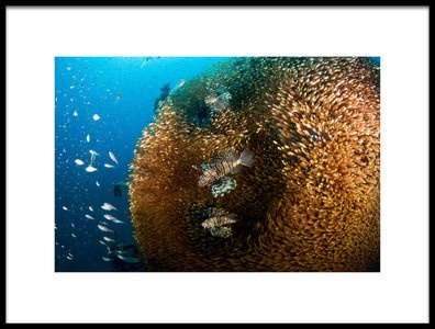 Art print titled Glass and Lion Fish by the artist Ilan Ben Tov