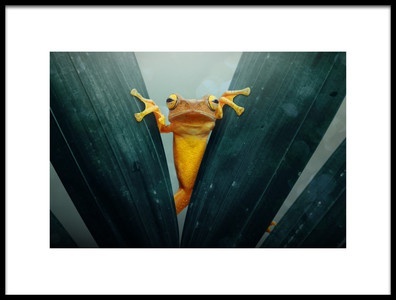 Art print titled Gold Frog by the artist andri priyadi
