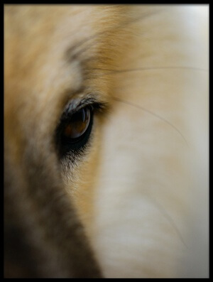 Art print titled Golden Eye by the artist Katrin Benary