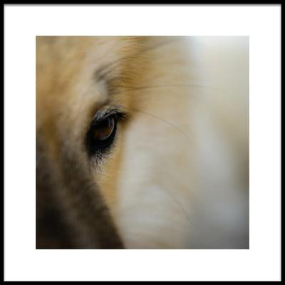 Buy this art print titled Golden Eye by the artist Katrin Benary