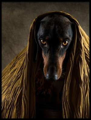 Buy this art print titled Golden Eyes by the artist Heike Willers