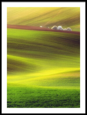Art print titled Golden Fields by the artist Piotr Krol (Bax)