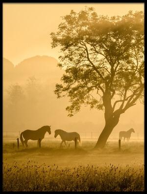 Buy this art print titled Golden Horses by the artist Richard Guijt