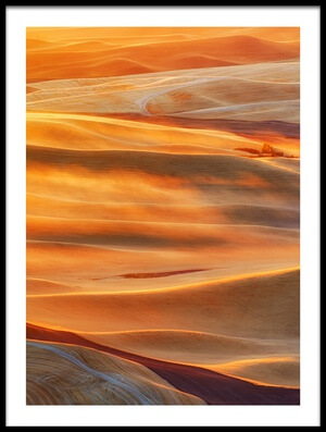 Art print titled Golden Palouse by the artist Lydia Jacobs