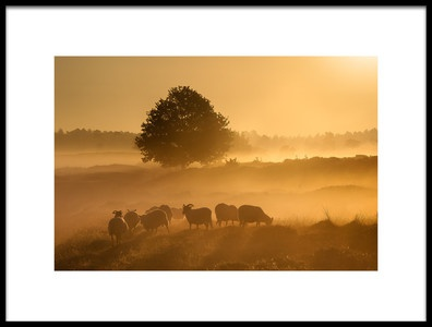 Art print titled Golden Sunrise  by the artist Piet Haaksma