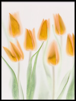 Buy this art print titled Golden Tulips by the artist Brian Haslam