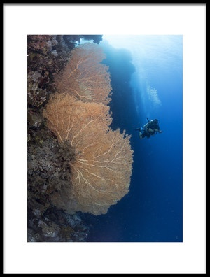 Art print titled Gorgonian Coral and a Diver by the artist Ilan Ben Tov