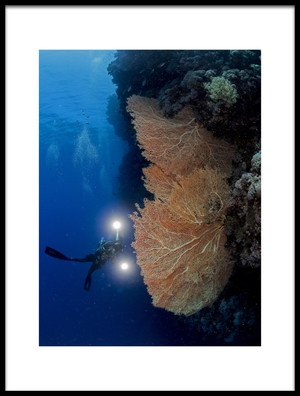 Buy this art print titled Gorgonian Coral and an Underwater Photographer by the artist Ilan Ben Tov