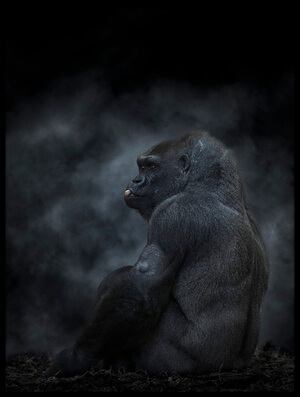 Art print titled Gorilla by the artist Alvaro Sánchez