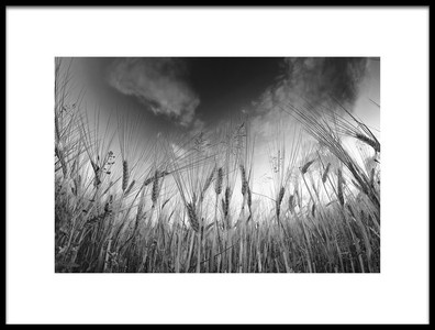Art print titled Grain by the artist Benny Pettersson