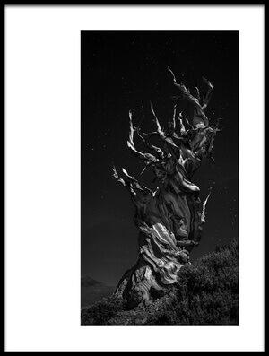 Art print titled Grand, Grand, Grand-pa's Tree by the artist Simon ChengLu