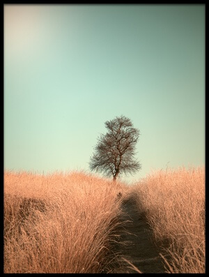 Buy this art print titled Grass and Path by the artist Jaap van den Helm