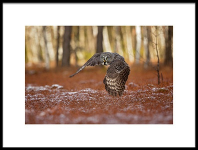 Art print titled Great Grey Owl by the artist Milan Zygmunt