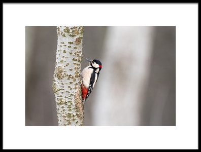 Art print titled Great Woodpecker by the artist marcobesso
