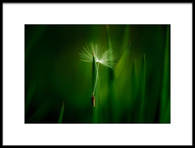 Art print titled Green by the artist Chris Coenders