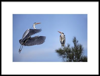 Art print titled Grey Heron by the artist Xavier Ortega