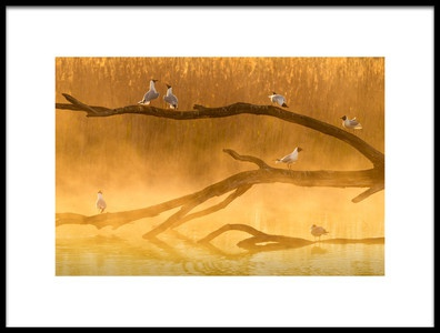 Art print titled Gull Chat by the artist Sandy Spaenhoven
