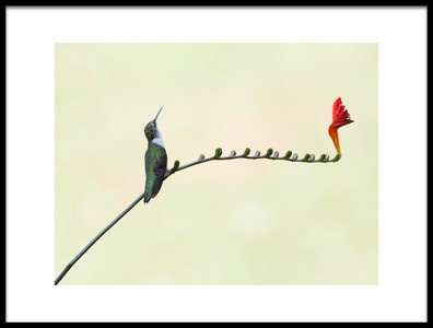 Art print titled Harmony by the artist HM Shen