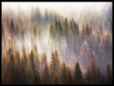 Buy this art print titled Hazy Forest by the artist Atul Chopra