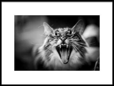 Art print titled Hear Me Meow by the artist Olivier Roca