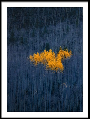 Art print titled Heart of Aspens by the artist Michael Zheng