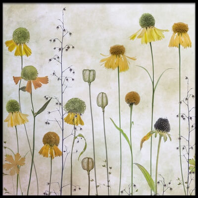 Art print titled Helenium by the artist Mandy Disher