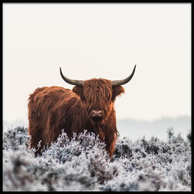 Buy this art print titled Highlander by the artist Jaap van den Helm