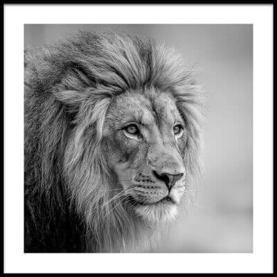 Art print titled His Majesty by the artist Jeffrey C. Sink