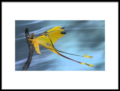 Art print titled Hold On Tight by the artist Jimmy Hoffman