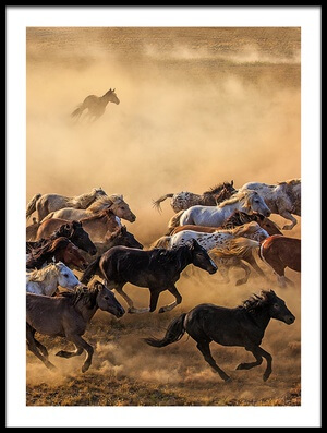 Buy this art print titled Horse Run by the artist Adam Wong