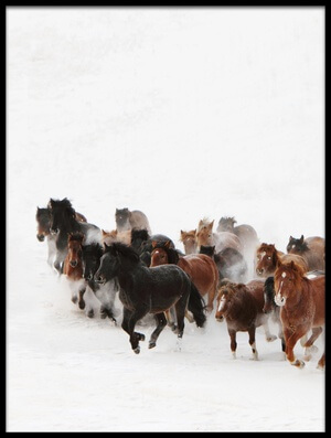 Buy this art print titled Horse Run In the Snow by the artist Adam Wong