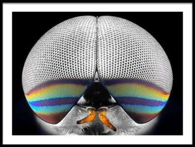 Art print titled Horsefly Portrait by the artist Donald Jusa