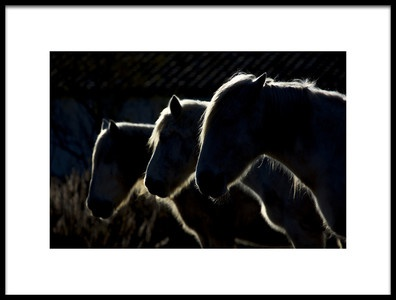 Buy this art print titled Horses Colored Version by the artist Michel Romaggi