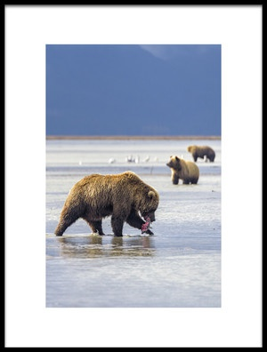 Buy this art print titled Hunting Bear by the artist Roberto Marchegiani