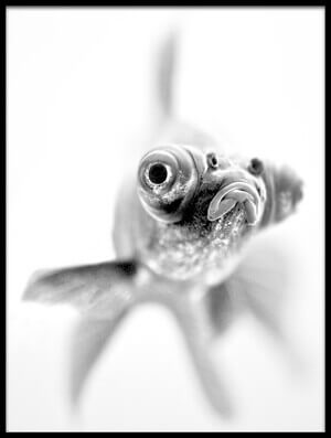 Art print titled I'm Ready for My Close Up by the artist Paul