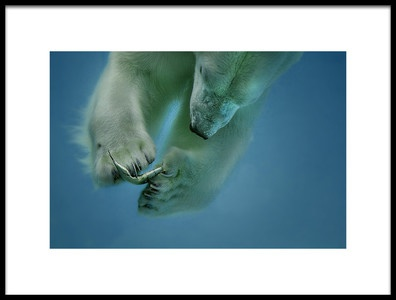 Art print titled Icebaer by the artist Peter Wagner