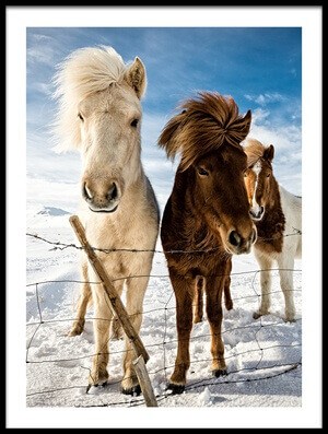 Art print titled Icelandic Hair Style by the artist Mike Leske