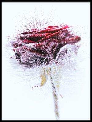 Buy this art print titled Icerose by the artist margit lisa roeder