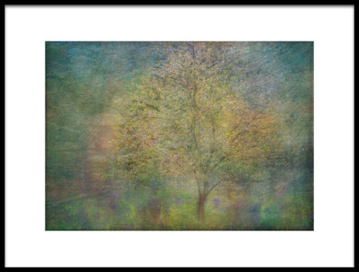 Buy this art print titled Impressions of a Tree by the artist Katarina Holmström