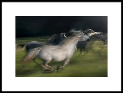 Art print titled In Gallop by the artist milan malovrh