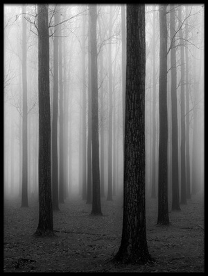 Art print titled In the Fog by the artist Jochen Bongaerts