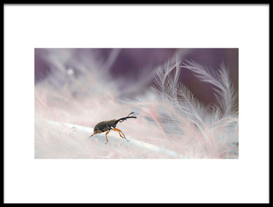 Art print titled In the Forest of Feathers by the artist Thierry Dufour