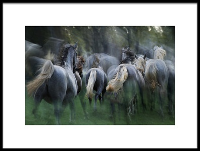 Art print titled In the Gallop by the artist milan malovrh