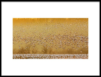 Art print titled In the Magic Golden Would by the artist David Hua