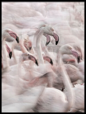 Buy this art print titled In the Pink Transhumance by the artist Martine Benezech