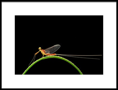 Art print titled In the Rainbow On the Mayfly by the artist Xióng Lù