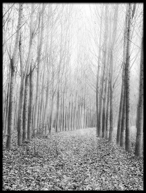 Buy this art print titled In the Woods by the artist George Digalakis